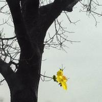 Chúc Xuân