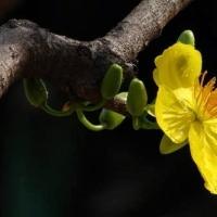 Lục Bát đầu Xuân