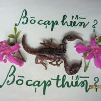 Tranh Bò CạpJG_UPLOAD_IMAGENAME_SEPARATOR1