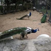 Vườn thú Đại Nam_1