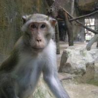 Vườn thú Đại Nam_4