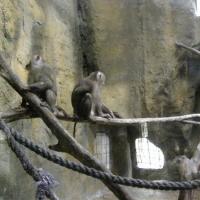 Vườn thú Đại Nam_5