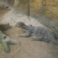 Vườn thú Đại Nam_6