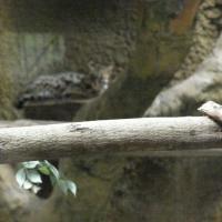 Vườn thú Đại Nam_7