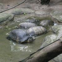Vườn thú Đại Nam_8