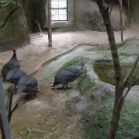 Vườn thú Đại Nam_9