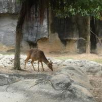 Vườn thú Đại Nam 011_1