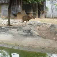 Vườn thú Đại Nam 011_2