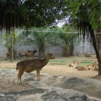Vườn thú Đại Nam 011_3