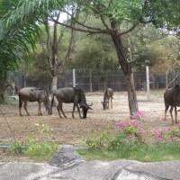 Vườn thú Đại Nam 011_5
