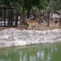 Vườn thú Đại Nam 011_7