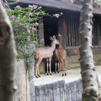 Vườn thú Đại Nam 011_8