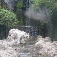 Vườn thú Đại Nam 011_10