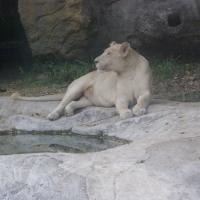 Vườn thú Đại Nam 020_1