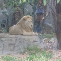 Vườn thú Đại Nam 020_2