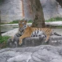 Vườn thú Đại Nam 020_4