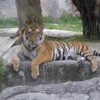 Vườn thú Đại Nam 020_5