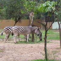 Vườn thú Đại Nam 020_9
