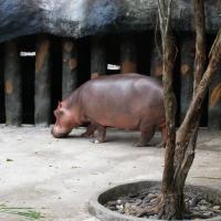 Vườn thú Đại Nam 020_10