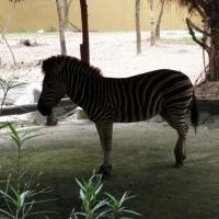 Du xuân 2012 thăm vườn thú