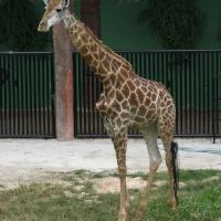 Vườn thú Đại Nam 031_2
