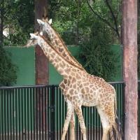 Vườn thú Đại Nam 031_4