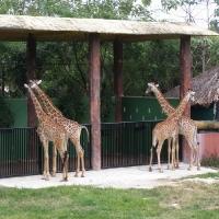 Vườn thú Đại Nam 031_5