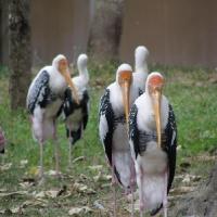 Vườn thú Đại Nam 031_10