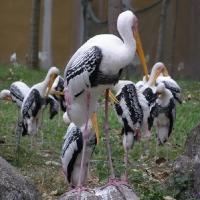 Vườn thú Đại Nam 041_1