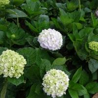 Hình của các loại hoa