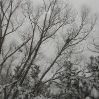 Bão tuyết đầu tiên ngày 9 tháng 12 năm 2012