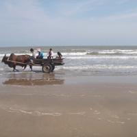 Đi xe bò dạo biển Xuyên Mộc