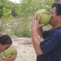 Hai cha con đang thi nhau uống nước dừa