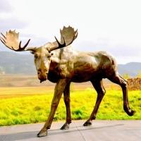 National Wild Life Museum, Jackson, WY