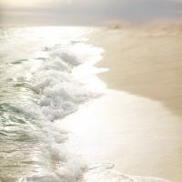 Hình Chèn - Hoa Biển
