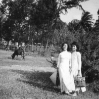 Niên khóa 1964-1971