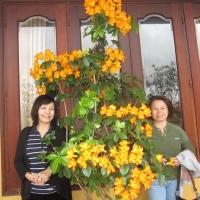 Đà Lạt Tháng 3 năm 2011 - Ngoc Dung Đông Oanh